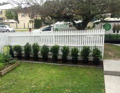 Frequently Asked Questions & Hedge Growing Tips in Australia