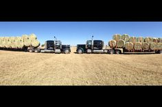 Hauling hay Farm Trucks, Cool Trucks, Big Trucks, Peterbilt 379, Peterbilt Trucks, Diesel Cars, Hay Bales, Great Life, Semi Trucks
