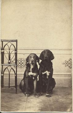 1875 cdv of Juno and Pluto, two hound dogs sitting very close to each other and staring straight into photographer's camera. Photo by W. Gartz, Penzlin, Germany. Dog's names are written in pencil on back of photo. From bendale collection