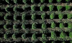 Best Weed Strains For Massive Yields