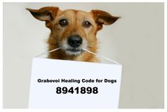 Grabovoi code for healing dogs. 8941898