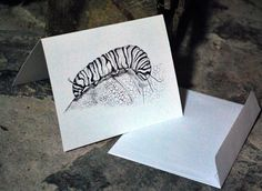 CATERPILLAR Pen and Ink Illustration on Blank Notecard Greeting Card, Nature Lover Wildlife Card Insect Drawing, Thank You Gift for a Friend by JensCreativeStore on Etsy