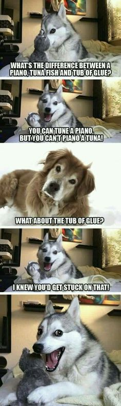 Meme Watch: Pun Dog Isn't Fat, He's Just A Little Husky Pun Dog (AKA Pun Husky) is an adorable Alaskan Klee Kai dog who has already stolen our hearts with dad jokes and sass. Dog Jokes, Funny Animal Jokes, Puns Jokes, Really Funny Memes, Funny Love, Stupid Funny Memes, Cute Funny Animals, Funny Animal Pictures, Puns Hilarious