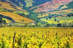 The patchwork vineyards of Montgras Winery, Santa Cruz, Chile © Fotografías Jorge León Cabello / Getty Images