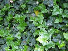 Plantas para combatir la humedad del hogar Si tu hogar es propenso a verse afectado por la humedad, te interesará saber que hay plantas que pueden ayudarte a controlarla. Respirar aire húmedo puede…
