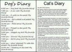 #dumbdog #evilcat