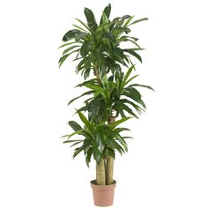 The simple elegance of our Corn Stalk Dracaena silk plant is now yours without ever needing to worry about watering or upkeep.