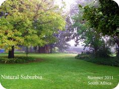 Natural Suburbia: nature inspired crafts and projects
