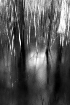 Duennwald Frozen Swamp 15   Abstract