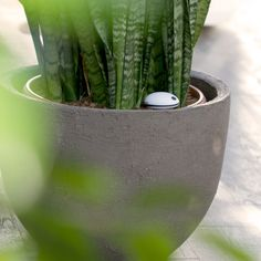 Plant sensor, comes with a free app, lets you know water and fertilizer. Finally I won't kill my plants.