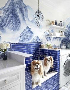 18 best dog shower images on pinterest dog shower laundry room i designed the dog wash for ease sit on the ledge hold them firmly they jump and rinse them with the kohler finial hand shower bandman says solutioingenieria Images