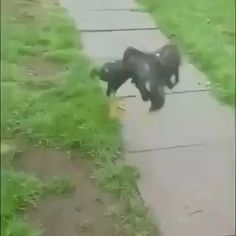 This dog breaks up a fight . Pls contact for credit or removal art breeds cutest funny training bilder lustig welpen Funny Animal Videos, Cute Funny Animals, Funny Animal Pictures, Animal Memes, Cute Baby Animals, Funny Dogs, Animals And Pets, I Love Dogs, Cute Dogs