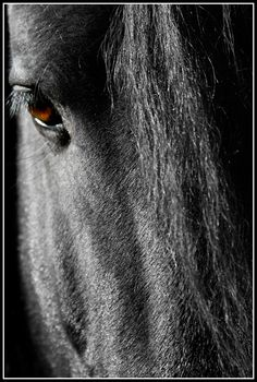 Friesian horse By: Petra Gospodnetic. #horse