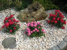 Landscape Design With Knockout Roses Knock Out Rose Landscaping Front Yard