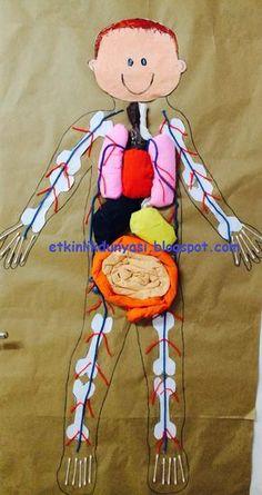 vücudumuz1.png (505×955)