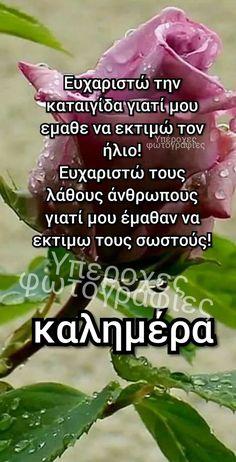 Greek Beauty, Beautiful Pink Roses, Greek Quotes, Greek Recipes, True Words, Good Morning, Spirituality, Gem, Buen Dia