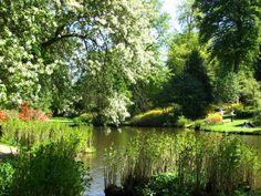 The beautiful Savill Garden. Windsor Great Park, Surrey
