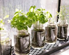 Aprenda a fazer mini hortas utilizando garrafas e potes de vidro | Catraca Livre