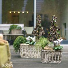 Bepflanzungen für Balkon und Terrasse im Winter
