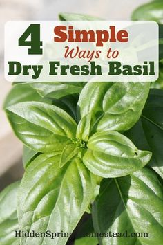Ways to Dry Fresh Basil How to Dry Basil - 4 methods to dry basil. In the dehydrator, Air Drying, and 2 more simple ways of drying basil.How to Dry Basil - 4 methods to dry basil. In the dehydrator, Air Drying, and 2 more simple ways of drying basil.