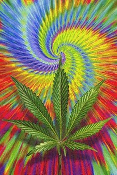 80 Best 1111 pot leaf images in 2018   Cannabis, Weed