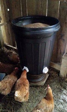 Criando galinhas