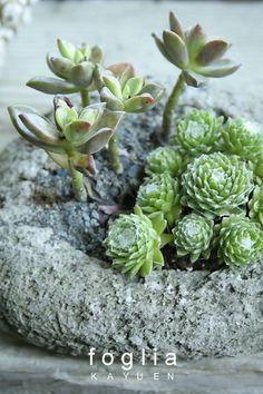 盆さい風な多肉の寄せ植えの画像 | fogliaのブログ