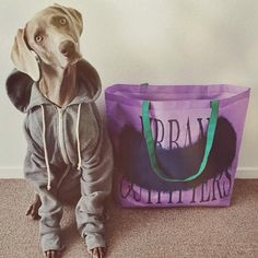 Urban pups, our fave.