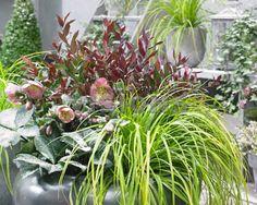 Container Plants, Planting, Plants, Potted Plants, Houseplants, Planters