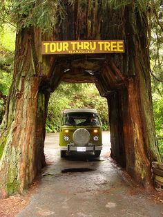 Red wood forest...Have always wanted to do this and visit the Red Wood Forest. Wow trees big enough to drive through!