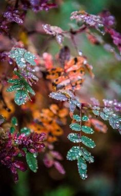 Tranquil photo, raindrops on leaves