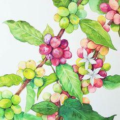 여전히ing  과정도 예쁜 커피나무☕  열매는 그릴때 매우지치고 소름 돋을때도 많은데(열매가 너무 많아서) 커피나무는 열매색감이 다양하고 예뻐서 재미있다.   한주쉬고 4월수업이 시작된 이번주 한주만에 만나고, 몇 달 만에 만나고, 처음 만난 모든 훼미리분들 반가웠어요~ 담주 부터 더 재미나게 그려요 아직 못만난 훼미리 분들은  담주에 만나요    #nonameillustrator #illust #illustration #painting #watercolor #일러스타그램 #일러스트 #페인팅 #손그림 #수채화 #flowerstagram #flower #plants #꽃 #꽃스타그램 #꽃그림 #식물