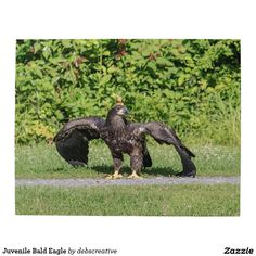 Juvenile Bald Eagle Jigsaw Puzzles