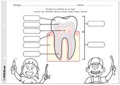 Salud Bucodental infantil. Actividad: partes de los dientes con Pipo por @evapipo (Eva Barcelo)