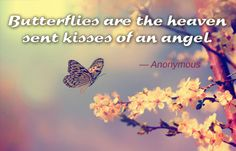 Angel Butterfly Quote