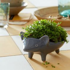 hedgehog planter - nostalgic...reminds me of a chia pet!