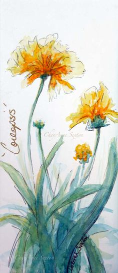 Butter Yellow Coreopsis   watercolour panoramic by CheyAnneSexton, $25.00