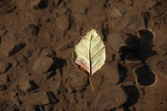 Floating Leaf Shadow Photo by Carrie Atkins — National Geographic Your Shot