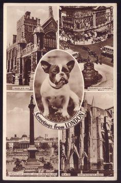 French Bulldog DOG. Old REAL PHOTO postcard UK