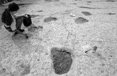 Pista de pegadas na Pedreira do Galinha, na Serra d'Aire