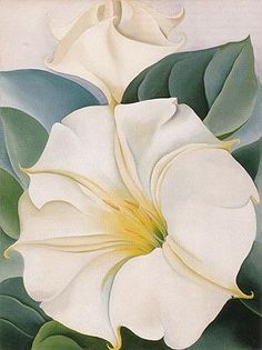 yama-bato: Georgia O'Keeffe Jimson Weed 3 1931 Alfred Stieglitz, Georgia O'keefe Art, Georgia O Keeffe Paintings, Wisconsin, Oil Painting Reproductions, Art Graphique, American Artists, Monet, Flower Art