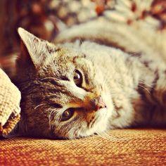 Kot. Cat. He.