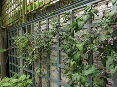 Lummiga trädgården med granatäpplen i London ~ inspiration nr 7
