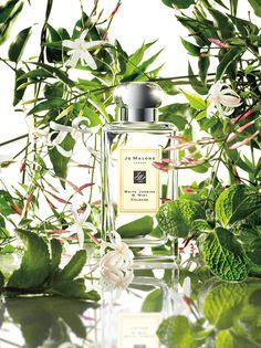 Jo Malone™ White Jasmine & Mint Cologne is sweet, feminine and fresh.