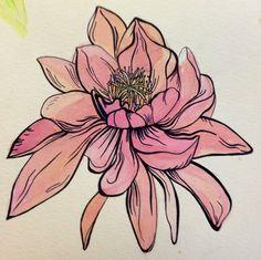 Flower illustration by Lily Rose Dambelli