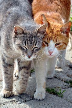 Katzenpärchen / Cats in love | Flickr: Intercambio de fotos