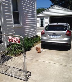 This enthusiastic guardian who will do whatever it takes to protect her home. | Beware Of These 19 Dogs: We Warned You