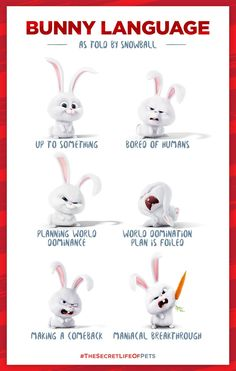 Bunny Language as told by Snowball - The Secret Life of Pets Funny Bunnies, Cute Bunny, Animals Images, Cute Animals, Bunny Quotes, Pets Movie, Up To Something, Secret Life Of Pets, Bunny Art
