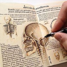 https://flic.kr/p/kRYFgc | Anatomy lesson | See more of my Moleskine pages in Instagram @jose_naranja