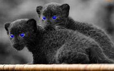 oczy też niebieskie..